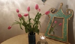 shvat tulips